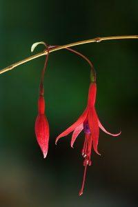 By JJ Harrison (https://www.jjharrison.com.au/) - Own work, CC BY-SA 3.0, https://commons.wikimedia.org/w/index.php?curid=6443311