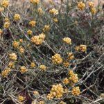 Par Ghislain118 (AD) http://www.fleurs-des-montagnes.net — Travail personnel, CC BY-SA 3.0, https://commons.wikimedia.org/w/index.php?curid=12777919